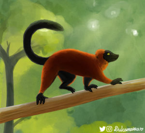 Red ruffed lemur study